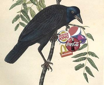 Branding birds crow